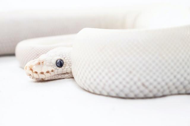 鬼滅の刃 蛇の呼吸一覧(英語版)