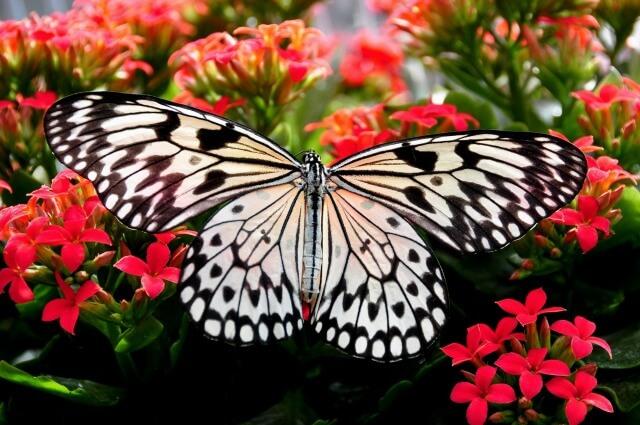 鬼滅の刃の胡蝶しのぶを英語で説明