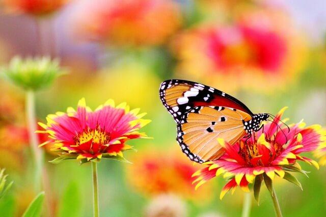 鬼滅の刃の胡蝶カナエを英語で説明