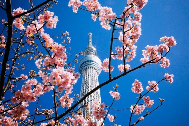 東京スカイツリーを英語で説明