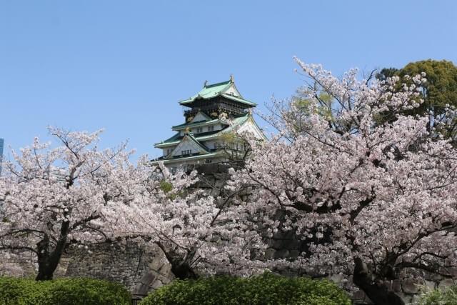 大阪城の桜を英語で説明